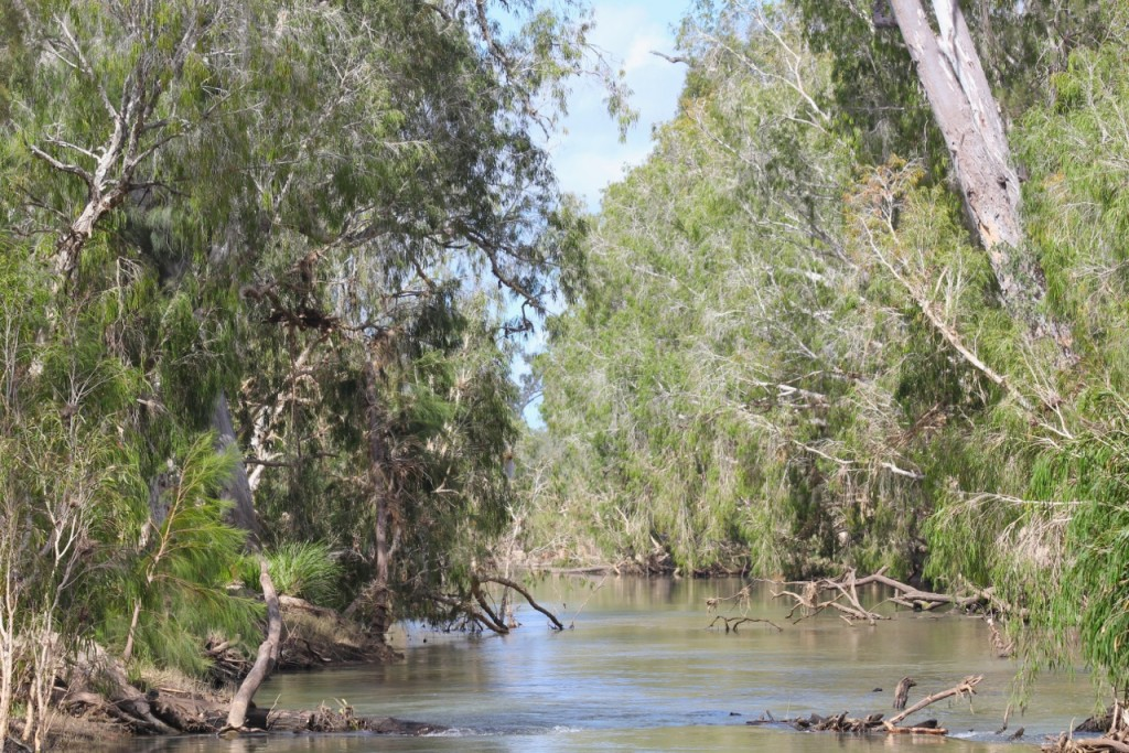 Keelbottom Creek - a classic north Queensland stream. Photo M. Tattersall.