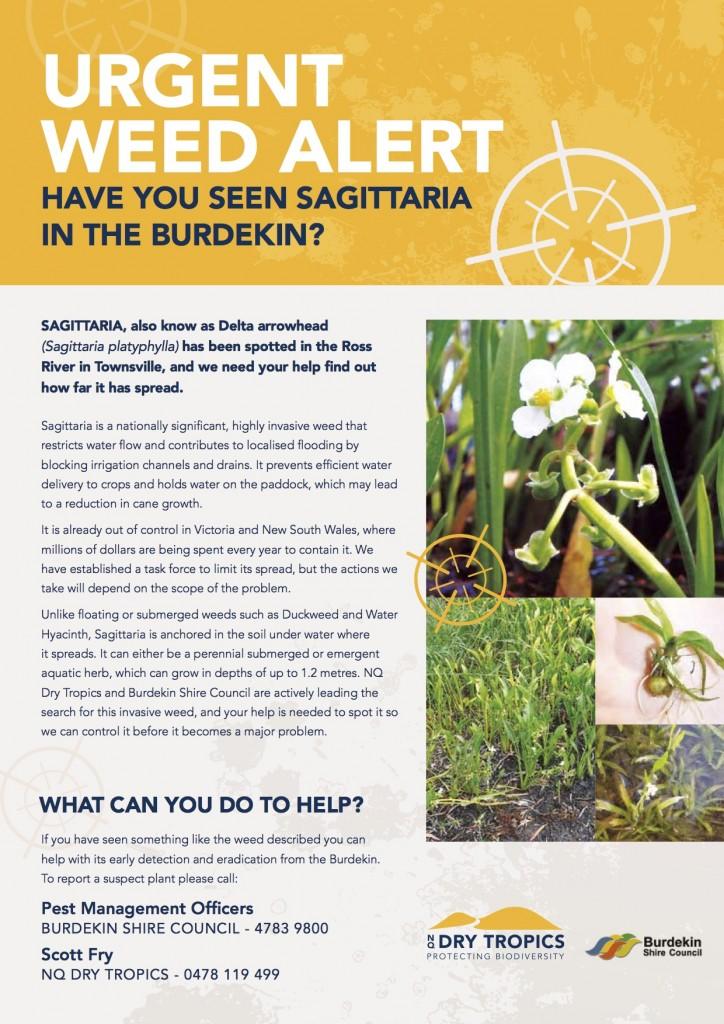 Sagittaria 9161_NQDT Weed Alert Fact Sheet Flyer_FA_web