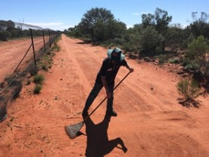 Raking the sand. Photo from Save the Bilby Fund.
