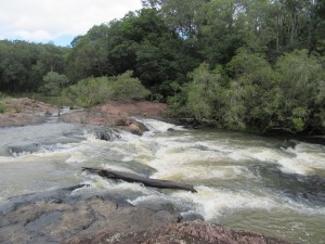 Stony Creek L. Downes