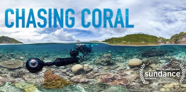 Chasing Coral1