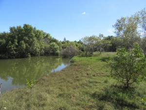 Mangrove-lined creek. Photo: L. Downes