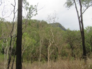 Ironbark and C. platyphilla woodland Photo M. Tattersall