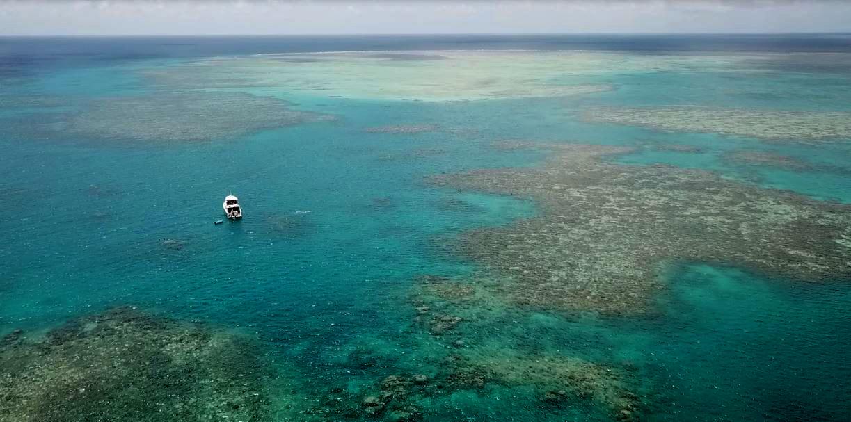 Ellison reef - where it all began. Photo Liz Gallie.