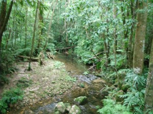 Birthday Creek upstream of bridge. Photo WQ Townsville