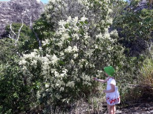 JH_50th Child and wattle