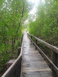 Across a mangrove creek GNP Photo L. Downes