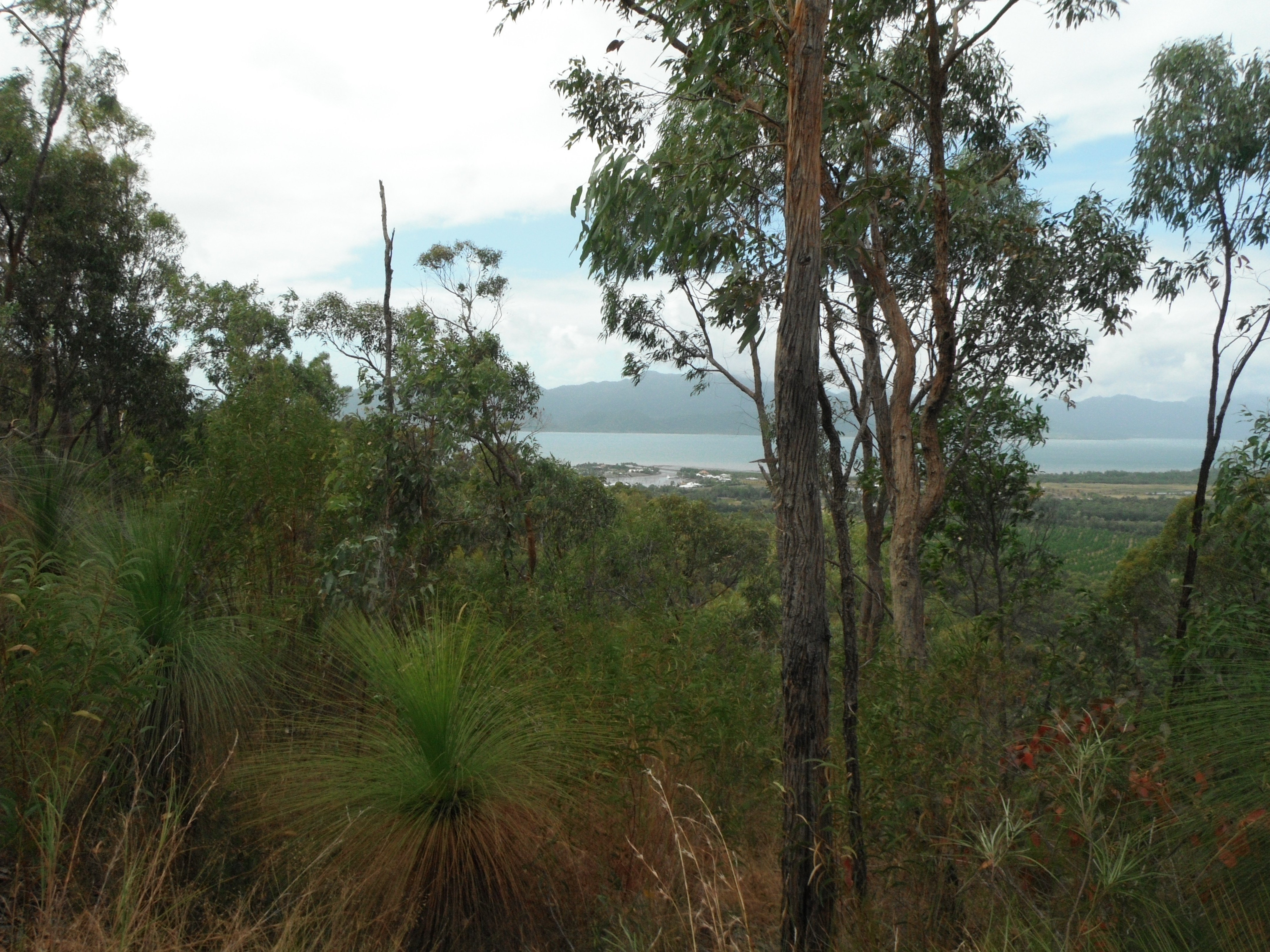 Overlooking Hinchinbrook channel Photo DS