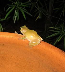 Happy & healthy frog