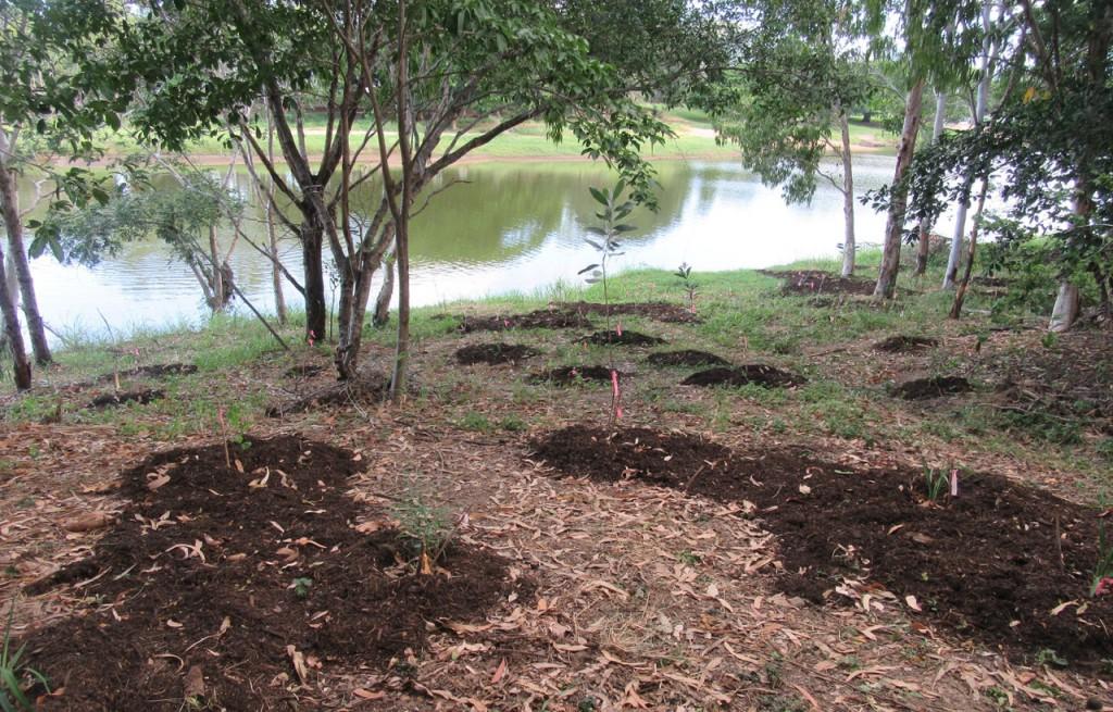 Landcare plantings along Mundingburra riverbank