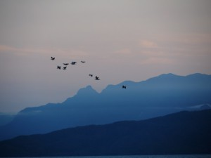 PIPs fly past Hinchinbrook. Photo Nina Dawson.