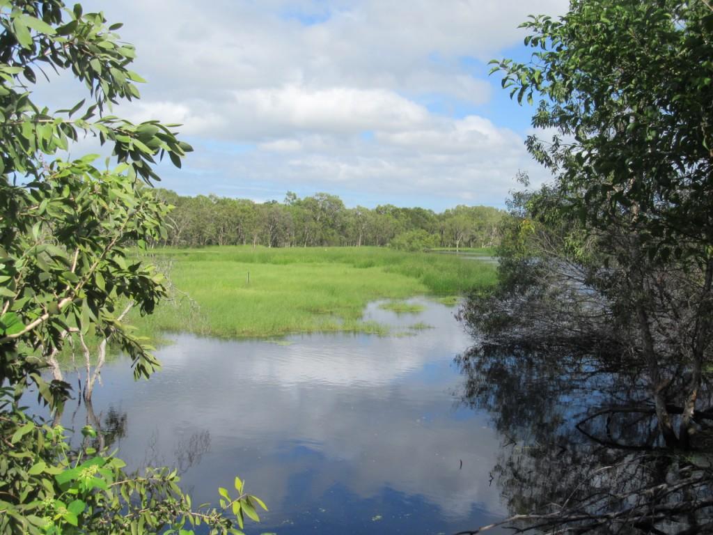 Rowes Bay Wetlands Photo L.Downes
